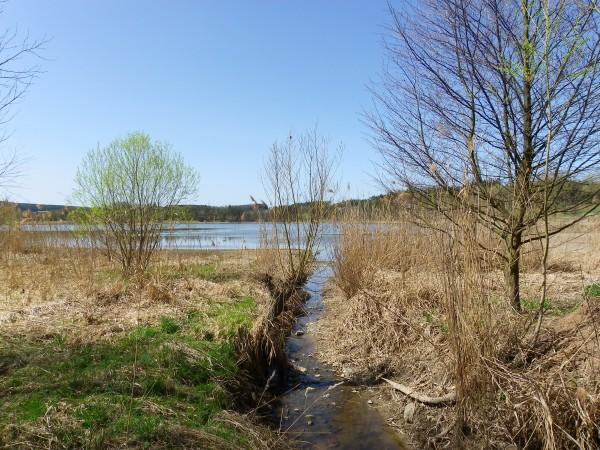 Sytenský rybník